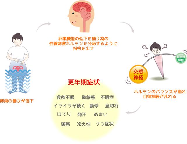 更年期障害のサイクル